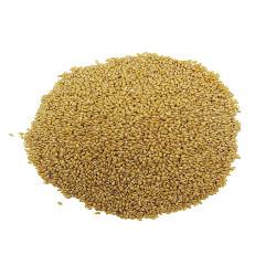 Sachet de 50g de graines alpiste