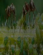 Découvrez nos différentes espèces de fourmis