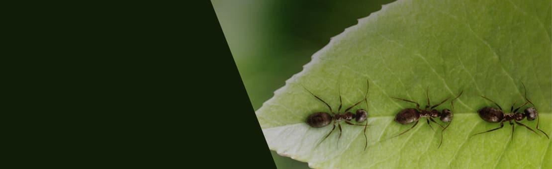 Commandez vos fourmis au meilleur prix